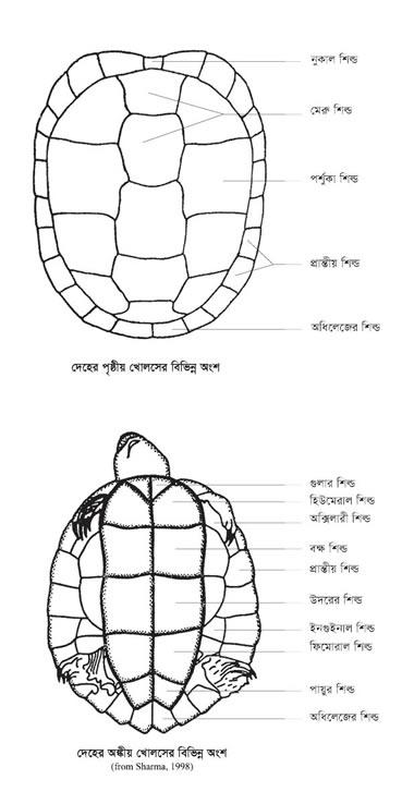 TurtleandTortoiseLevelling(B).jpg