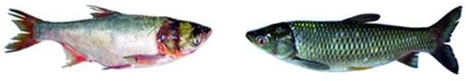 চিত্র:ExoticFish3.jpg