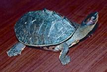 TurtleTortoise4.jpg