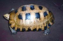 TurtleTortoise3.jpg