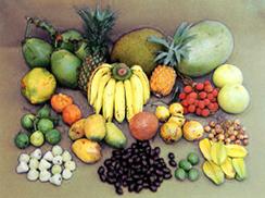 চিত্র:Fruit1.jpg