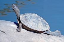TurtleTortoise1.jpg