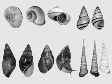 চিত্র:Snail.jpg