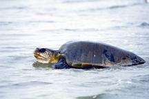 TurtleTortoise5.jpg