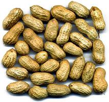 চিত্র:Groundnut.jpg