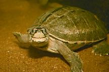 TurtleTortoise6.jpg